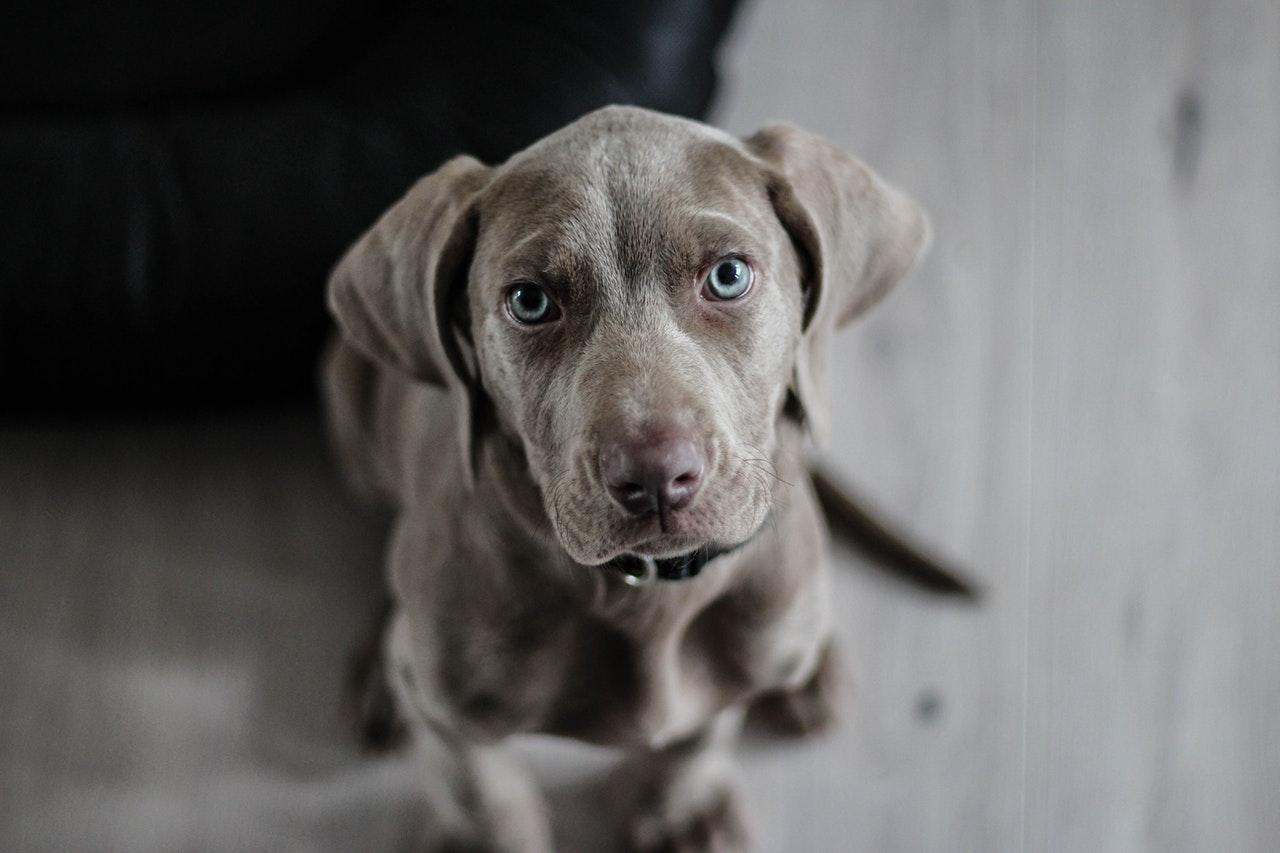 a cute gray medium sized dog