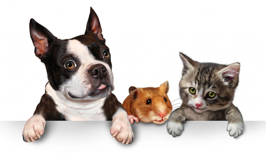 dog hamster and cat